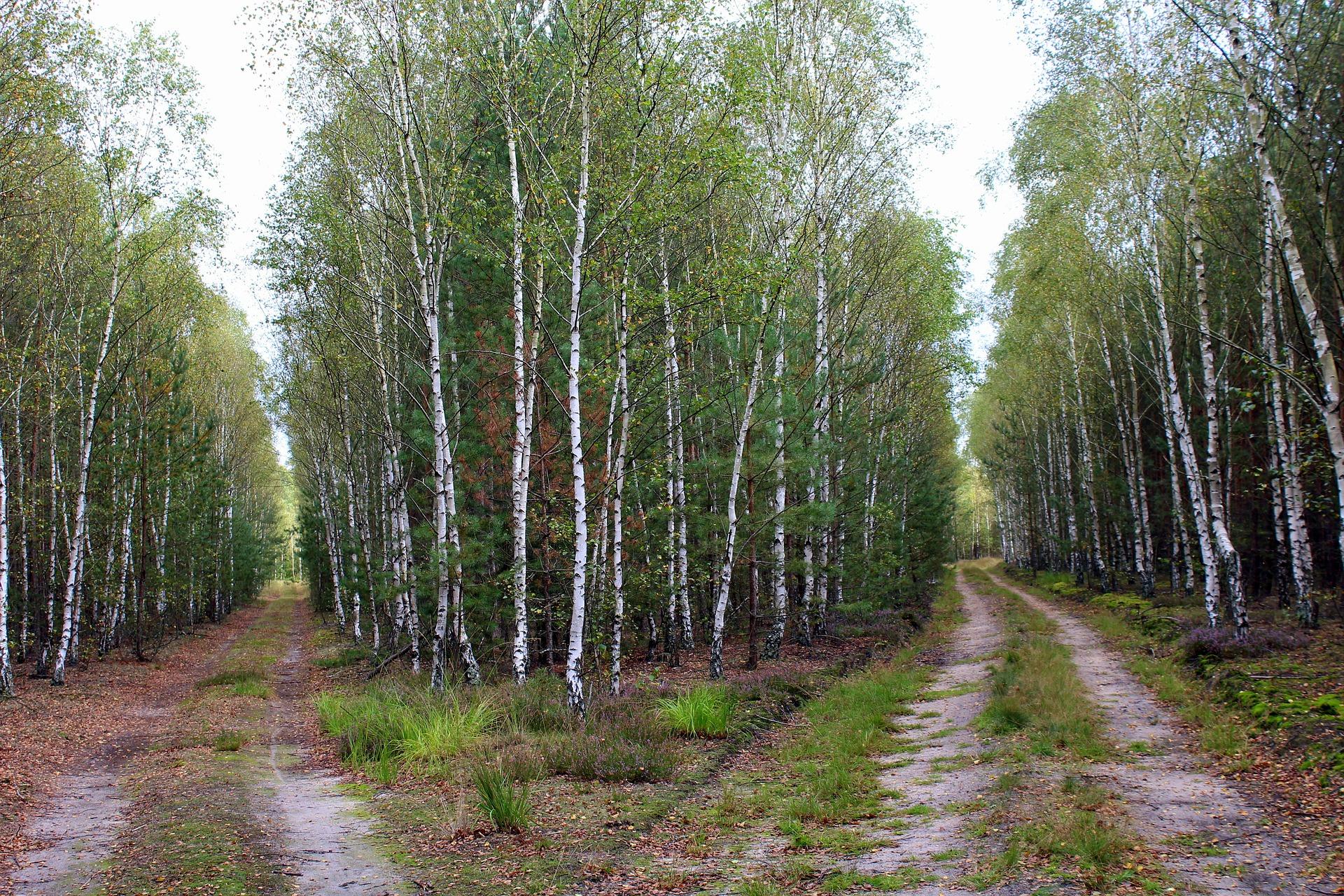 Las, dwie ścieżki