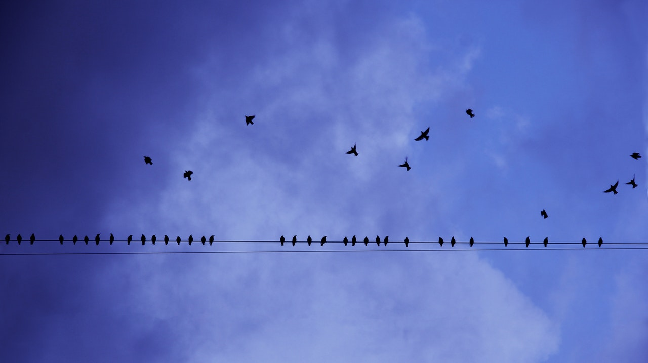 birds on wire - illustration