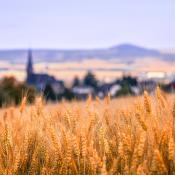 Landschaft, Getreidefeld mit Dorf im Hintergrund