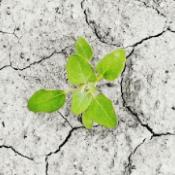EPALE Themenschwerpunkt Umweltbewusstsein und Umweltschutz