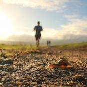 Das Bild zeigt zum einen Jogger im Hintergrund und zum anderen eine Schnecke, die im Vordergrund die Laufstrecke kreuzt.